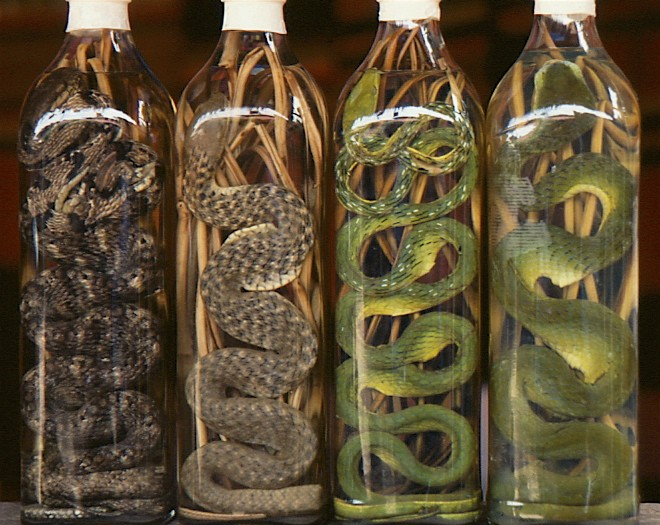 Snake in the glass: pickled reptile attacks baijiu aficionado