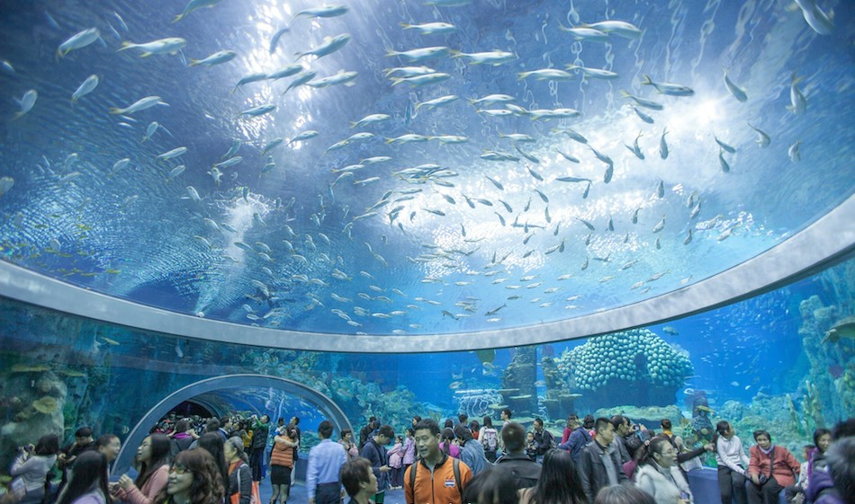 Worlds Largest Aquarium Opens In Guangdong Breaking World - Biggest ocean in the world