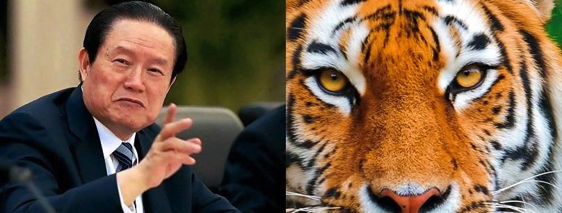 China celebrates International Tiger Day by beginning investigations into Zhou Yongkang