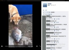 WATCH: Most compassionate dog ever injures nose trying to save dying fish in Taiwan