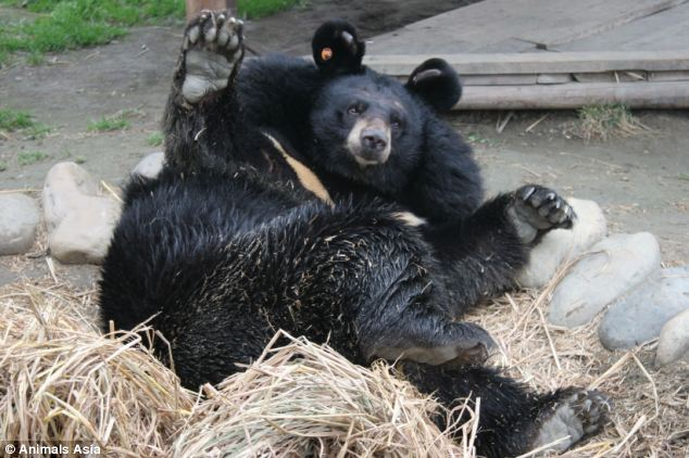 PHOTOS: British vet gives sight back to Moon Bears blinded in China's bile harvesting farms