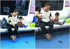 Yes, passengers are walking crabs on the Shanghai Metro
