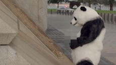 WATCH: Pissing panda ad urging Chinese tourists to behave better abroad pulled from CCTV
