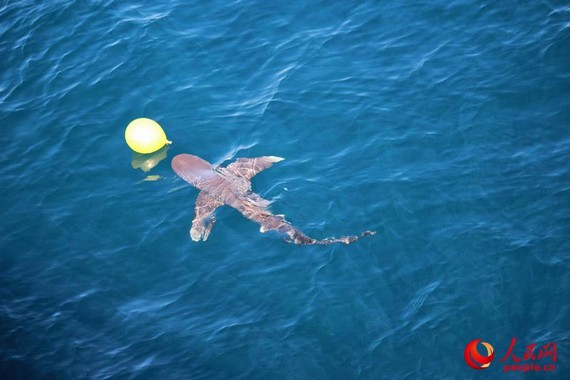 How one shark stopped a Chinese naval flotilla dead in its tracks in Gulf of Aden