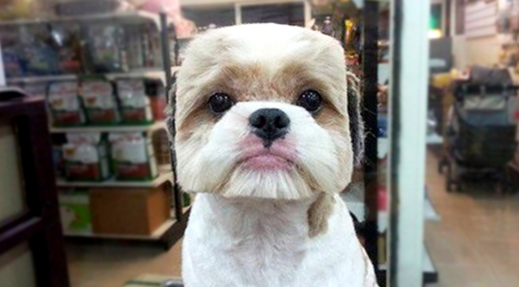 Taiwan pet owners are turning their dogs into shapes, for some reason