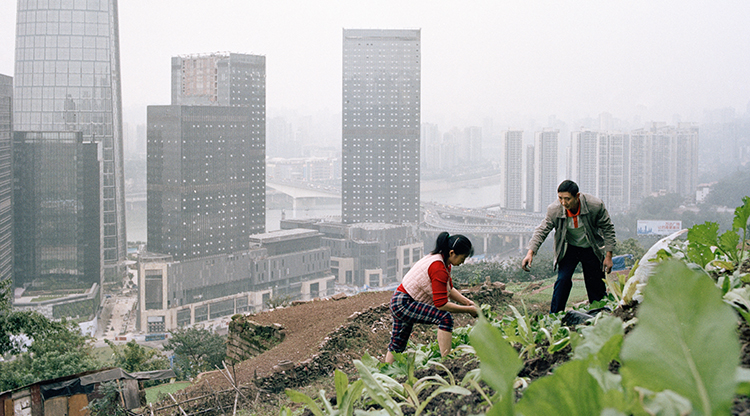 Photo essay: Farming under skyscrapers in Chongqing