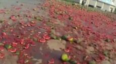 WATCH: Watermelon massacre after truck crashes