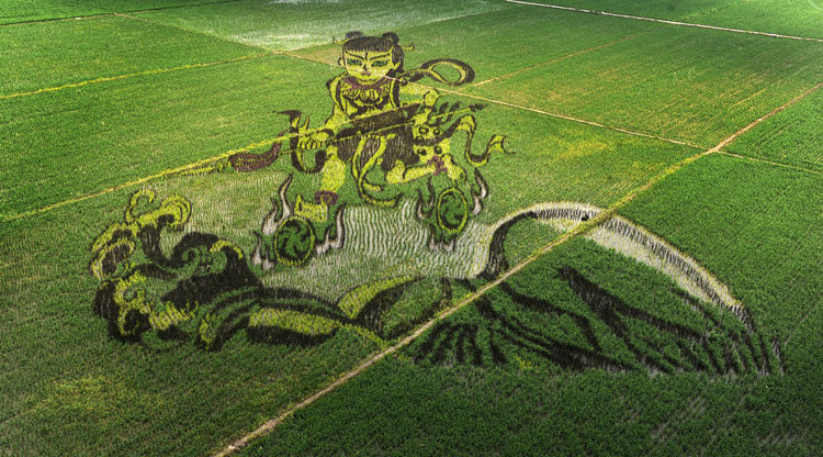 PHOTOS: Chinese farmers create rice paddy art