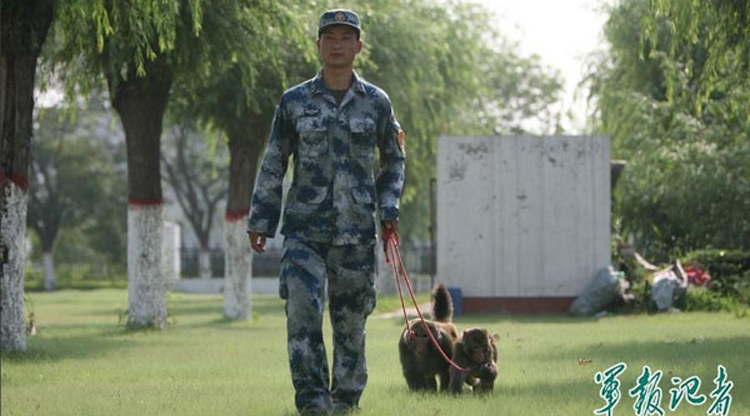 PLA dispatches monkeys, dogs and falcons to prevent bird strikes from ruining military parade